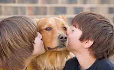 Dog-Fence-PA.jpg
